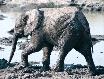 ...gilt auch für Elefanten.