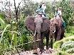 Safari zum anfassen...nicht ganz die Wildnis
