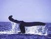 Whale Watching auch hier möglich.