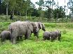Addo Elephant Park, ein MUSS für jeden Dickhaut-Liebhaber.