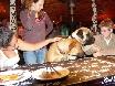 Beim Abendessen bleibt garantiert nichts übrig. Diese beiden Hunde sprechen 7 Weltsprachen....fließend!